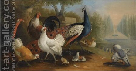 A Peacock, A Turkey, Chickens And Doves In A Garden Setting by (after) Pieter Casteels III - Reproduction Oil Painting