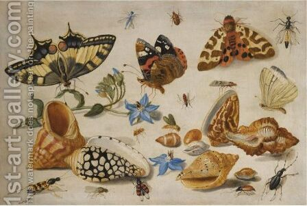 A Swallowtail (Papilio Machaon), Red Admiral (Vanessa Atalanta) And Other Insects With Shells And A Sprig Of Borage (Borago Officinalis) by Jan van Kessel - Reproduction Oil Painting
