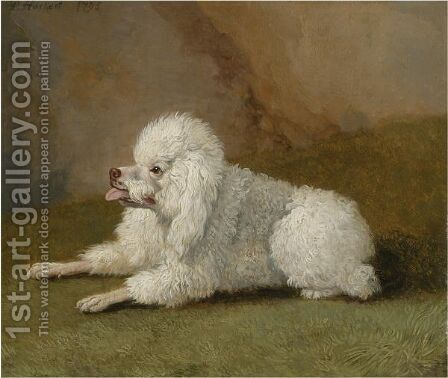 Portrait Of A Poodle by Jakob Philippe Hackert - Reproduction Oil Painting