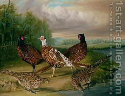 Pheasants by the River Wensum, Norfolk by James Blazeby - Reproduction Oil Painting