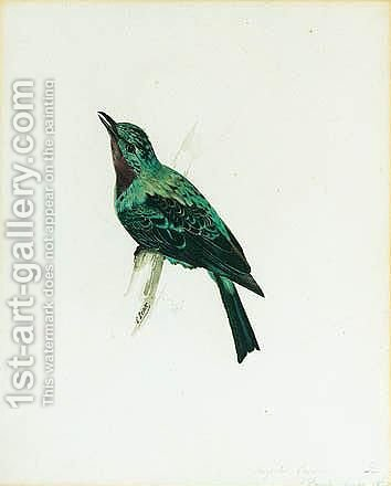 A Purple-throated Chatterer by Edward Lear - Reproduction Oil Painting