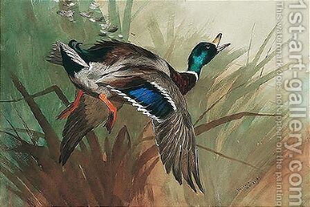 A Winged Mallard by Archibald Thorburn - Reproduction Oil Painting