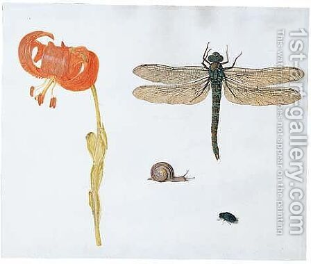 Study of a lily, a dragonfly, a snail and a beetle by (after) Herman Henstenburgh - Reproduction Oil Painting
