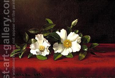 Two cherokee roses on red velvet 1889 by Martin Johnson Heade - Reproduction Oil Painting