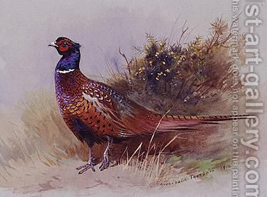 The Pheasant by Archibald Thorburn - Reproduction Oil Painting