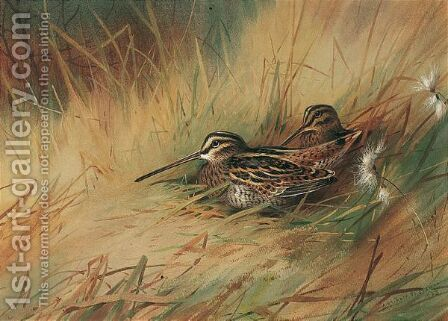Snipe 3 by Archibald Thorburn - Reproduction Oil Painting
