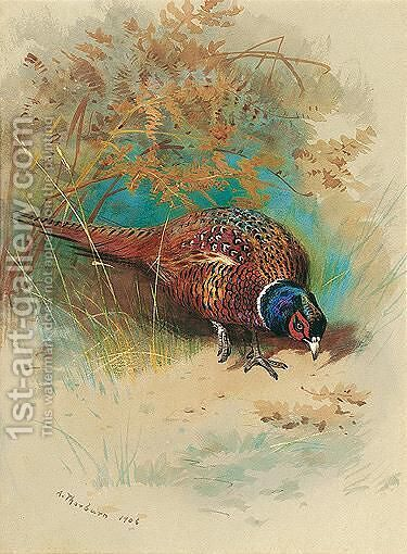 A Cock Pheasant Feeding by Archibald Thorburn - Reproduction Oil Painting