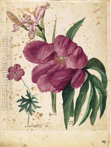 A Sheet Of Studies Of Flowers A Peony, A Spanish Iris And A Wild Geranium by Jacques (de Morgues) Le Moyne - Reproduction Oil Painting