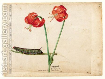 A Sheet Of Studies With Two Day Lilies And A Caterpillar by Jacques (de Morgues) Le Moyne - Reproduction Oil Painting