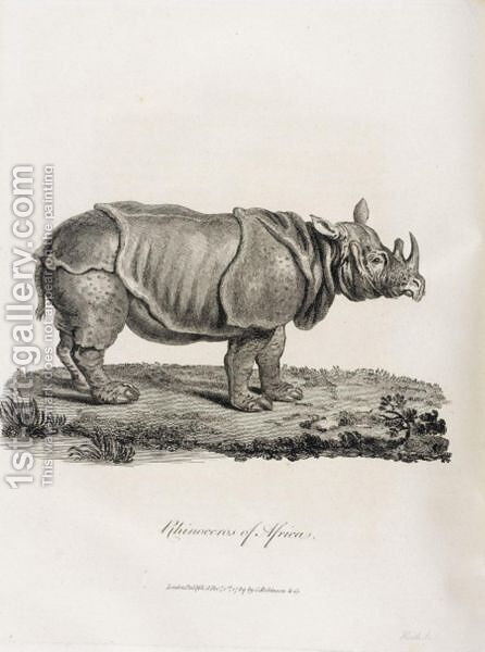 Rhinoceros by Bruce James Talbert - Reproduction Oil Painting