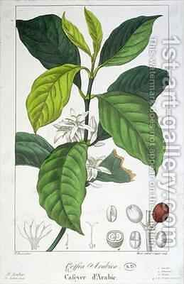 Coffea Arabica (Coffee) by (after) Bessa, Pancrace - Reproduction Oil Painting