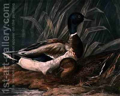 Wild Ducks, plate 5 of British Feather Game by (after) James Barenger - Reproduction Oil Painting