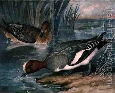 Widgeons, plate 6 of British Feather Game by (after) James Barenger - Reproduction Oil Painting