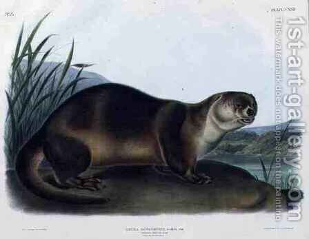 Lutra Canadensis or Lataxina Mollis (Canada Otter) by (after) Audubon, John Woodhouse - Reproduction Oil Painting