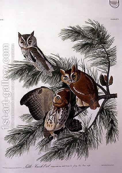 Little Screech Owl, from 'Birds of America' by (after) Audubon, John James - Reproduction Oil Painting
