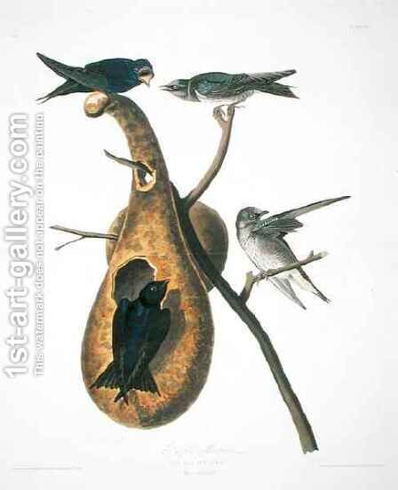 Purple Martin, from 'Birds of America' by (after) Audubon, John James - Reproduction Oil Painting