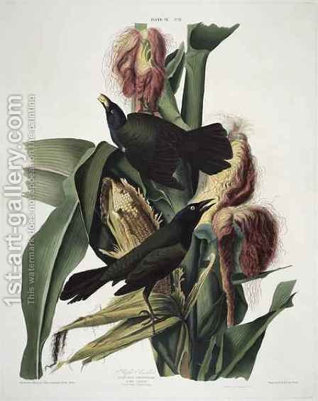 The Purple Grackle, from 'Birds of America' by (after) Audubon, John James - Reproduction Oil Painting