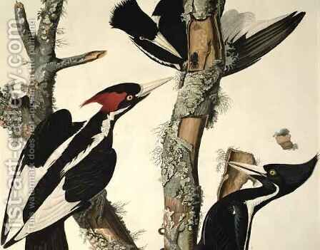 Ivory-billed Woodpecker, from 'Birds of America' by (after) Audubon, John James - Reproduction Oil Painting