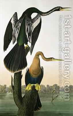 Black-Billed Darter, from 'Birds of America' by (after) Audubon, John James - Reproduction Oil Painting