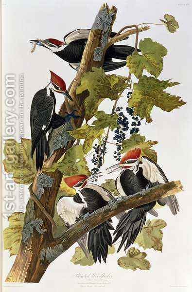 Dryocopus pileatus (Pileated Woodpecker) one adult male and female with two young males by (after) Audubon, John James - Reproduction Oil Painting