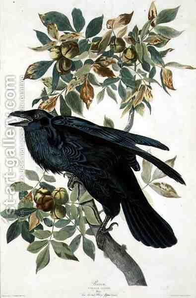 Raven by (after) Audubon, John James - Reproduction Oil Painting