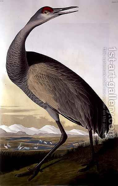 Sandhill Crane, from 'Birds of America' by (after) Audubon, John James - Reproduction Oil Painting