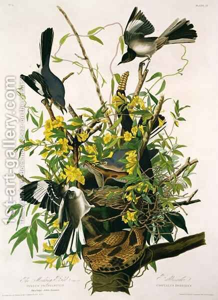 Mocking Birds and Rattlesnake, from 'Birds of America' 2 by (after) Audubon, John James - Reproduction Oil Painting
