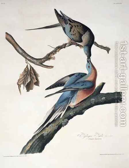 Passenger Pigeon, from 'Birds of America' by (after) Audubon, John James - Reproduction Oil Painting