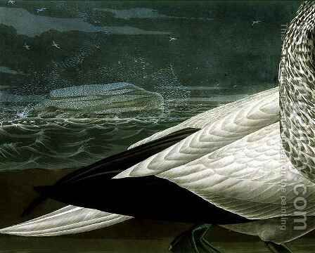 Gannets, from 'Birds of America' 2 by (after) Audubon, John James - Reproduction Oil Painting