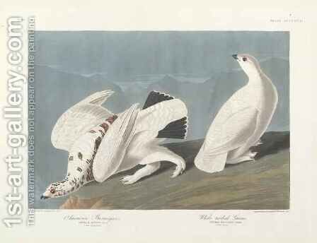American Ptarmigan, White-tailed Grous by (after) Audubon, John James - Reproduction Oil Painting