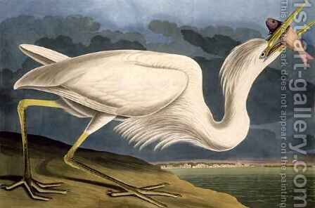 Great White Heron, from 'Birds of America' by (after) Audubon, John James - Reproduction Oil Painting