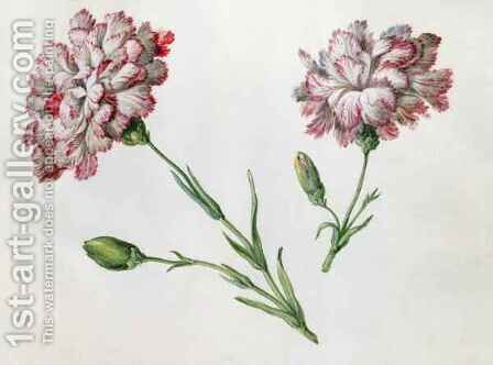 Carnations by Claude Aubriet - Reproduction Oil Painting