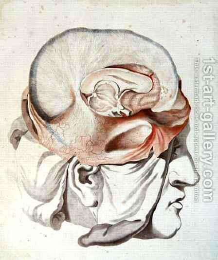 The Skull, from 'Traite d'Anatomie de Cerveau' by Angelique Allais (nee Briceau) - Reproduction Oil Painting