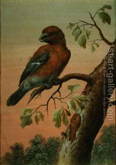 A Parrot on a Branch by Christoph Ludwig Agricola - Reproduction Oil Painting