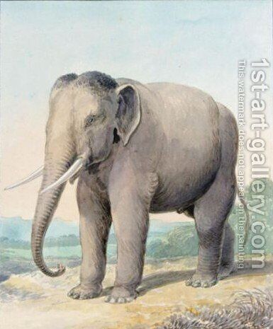 An Elephant by Charles Hamilton Smith - Reproduction Oil Painting