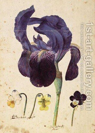 A German Iris And Three Violets by Jacques (de Morgues) Le Moyne - Reproduction Oil Painting