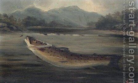 A fish 2 by (after) A. Roland Knight - Reproduction Oil Painting