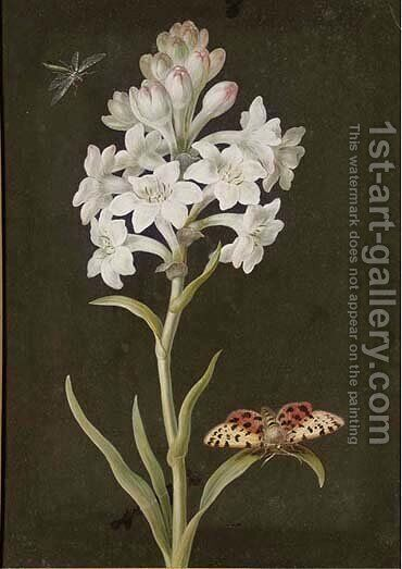 A hyacinth with a moth by (after) Barbara Regina Dietzsch - Reproduction Oil Painting