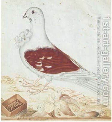 A white dove with seeds by James Bolton - Reproduction Oil Painting