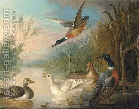 Ducks on a river by Marmaduke Cradock - Reproduction Oil Painting