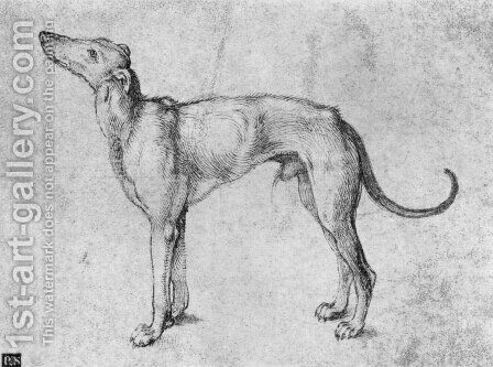 Greyhound by Albrecht Durer - Reproduction Oil Painting