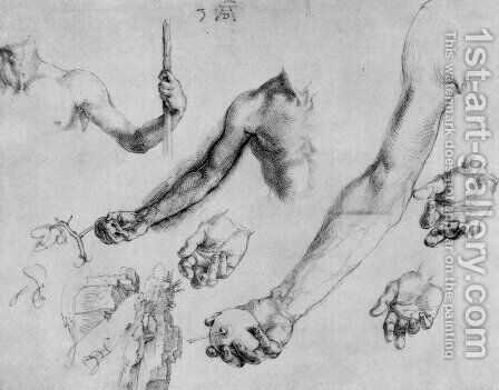 Study of male hands and arms by Albrecht Durer - Reproduction Oil Painting