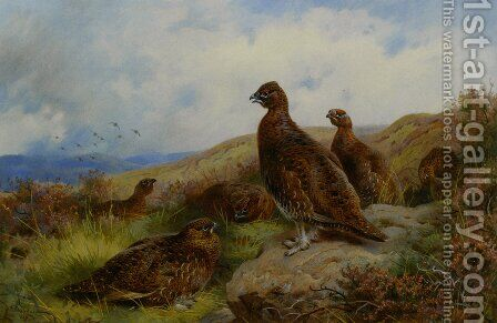 Red Grouse Packing by Archibald Thorburn - Reproduction Oil Painting