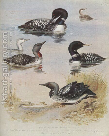 Great Northern Diver by Archibald Thorburn - Reproduction Oil Painting