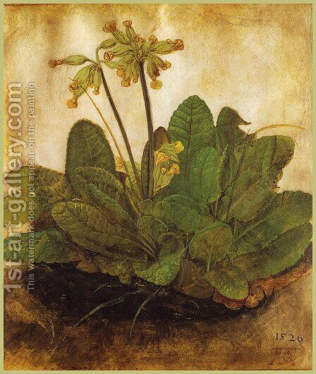 Primula by Albrecht Durer - Reproduction Oil Painting