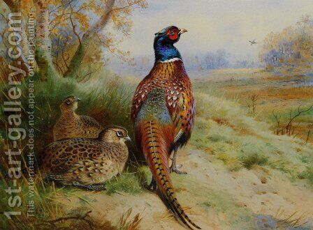 Cock and Hen Pheasant at the Edge of a Wood by Archibald Thorburn - Reproduction Oil Painting