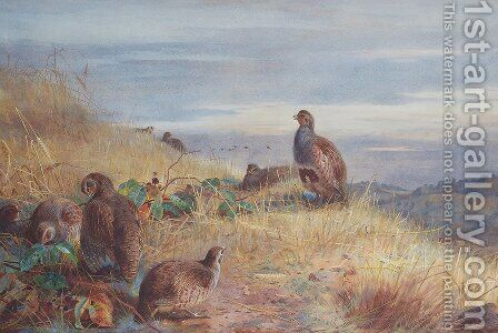 The Covey at Daybreak by Archibald Thorburn - Reproduction Oil Painting