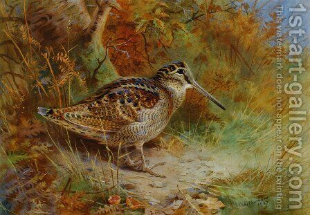 A Woodcock 2 by Archibald Thorburn - Reproduction Oil Painting