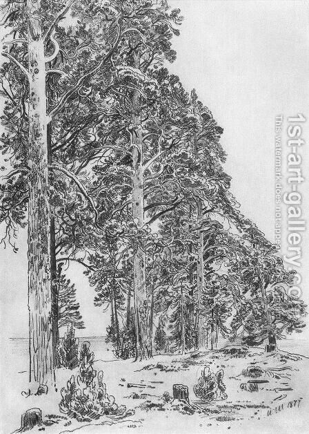 Pines on the beach by Ivan Shishkin - Reproduction Oil Painting
