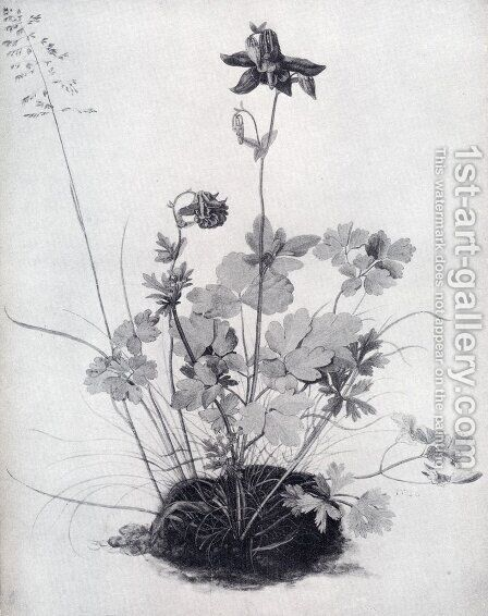 The Piece Of Turf With The Columbine by Albrecht Durer - Reproduction Oil Painting